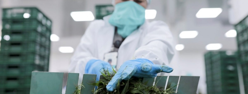 Cannabis company Acreage just cut 40 jobs following a strategic review, and it's the latest sign of a tough environment for cannabis sellers